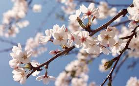 Peach Blossom Feng Shui Classique Zefirs consultation Secteur Amour